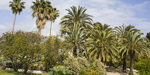 Parc phoenix Nice